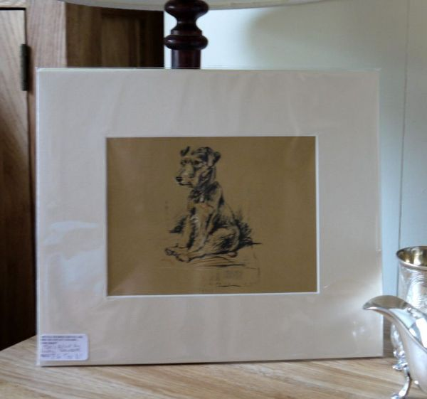Little Coloured Terrier - sitting 1930's print by Lucy Dawson - Ter D1